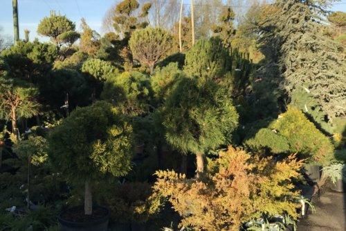 Côté jardin Jaidemescommercants.fr